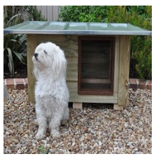 Wooden_Kennels___Flat_Roof